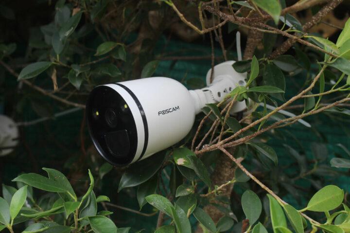 安装在小树上的福斯康姆SPC 摄像头